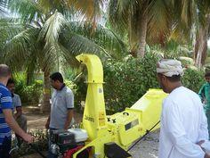 Zakandra - cutting Palms fronds  www.agrinova-italia.it