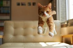 52 magnifiques photos de chats qui sautent   53 superbes photos de chats qui sautent jumping cats 3