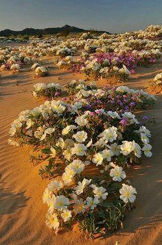 Resultado de imagem para desertos fotos e imagens pinterest