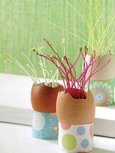 Recycle eggshells to get sprouts growing in this creative idea for a seed starter from Taste of Home