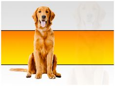 free powerpoint template dogs