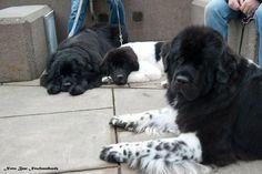 Familie van onze Snoop Dog?