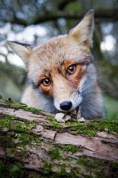 21-Year-Old Photographe Captures Enchanteur Snapshots de lui-même l'alimentation des animaux sauvages - M ...