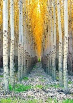 Aspen cathedral colorado...I would like to see this one day.