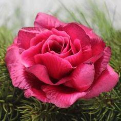 Burgundy, Flowers, Plants, Plant, Wine Red Hair, Royal Icing Flowers, Flower, Amaranth Grain, Florals