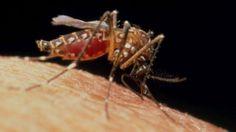 ¿Qué pasaría si matamos a todos los mosquitos que transmiten zika, dengue y chinkungunya? - BBC Mundo