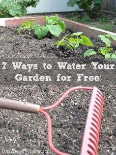 7 Ways to Water the Garden for Free | http://dontwastethecrumbs.com/2014/05/an-urban-garden-update-plus-7-ways-to-water-the-garden-for-free/