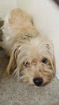 Lost terrier with fancy collar shivers in fear at shelter: Help find his family