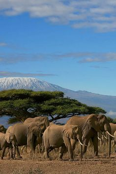 A safari tour is definitely a trip of lifetime. I can highly recommend a safari tour in Kenya which in my opinion offers the best safari in the world. Paises Da Africa, Out Of Africa, East Africa, African Animals, African Safari, Tanzania, Beautiful Creatures, Animals Beautiful, Places To Travel