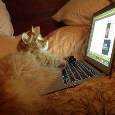 Enzo waiting for Jonathan to Skype him