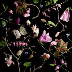 Faith is Torment | Art and Design Blog: Botanicals: Photos by Paulette Tavormina