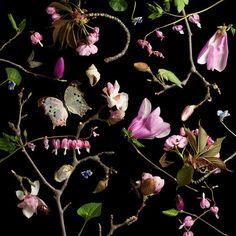 Fotografia Botânica - Paulette Tavormina