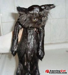 Could this poor kitty look any more possessed than this.  I feel for whoever is bathing him...have a feeling their eyes may be clawed from their sockets.  Ya gotta love cats....lol.  SH