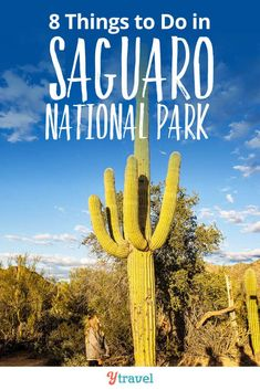 Saguaro National Park - 8 amazing things to do in these National Parks in Tucson.  This National Park in Arizona is one of the best places in the USA to see giant cactus.  Tips and information on the best things to do in the park, special attractions to note as you are on specific hikes, hiking trails to see the Desert Sunset, whether to go to east or west Saguaro, info on camping in the park, places to stay in Tuscon and more.  #Arizona #Tucson  #NationalPark #NationalParks #familytravel