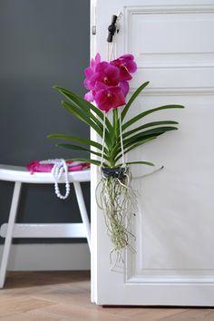 Quels soins pour une orchidée ? - Vanda                                                                                                                                                                                 Plus