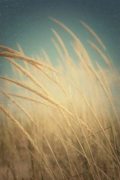 always seems like these feathery grasses love to have their picture taken :) so lovely every time