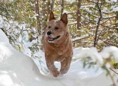 Introducing Meaford K9 Care ~ Dog Walking, Sitting and more