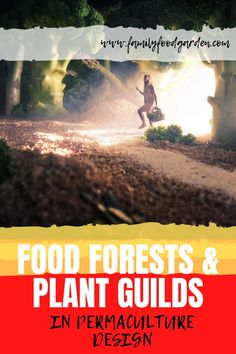 Take a look at these food forests and plant guilds in permaculture design. Create your own food forest today! Read more details on this pin! #permaculture #foodforest #garden #gardeningtips Forest Plants, Forest Garden, Healthy Fruits And Vegetables, Organic Vegetables, Container Gardening, Gardening Tips, Indoor Gardening, Vegetable Gardening, Permaculture Design