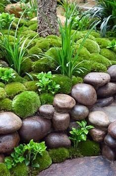 Moss garden  // Great Gardens & Ideas // Gardeners are using it all kinds of different decorative ways this year, it is everywhere! Note from Michele: Now this is more like it. We have tons of this smooth river rock here and building it up like this on the patio would give a very nice background for moss and ferns.