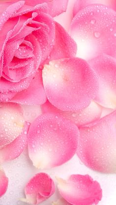 Rose Sparkle Glitter Wallpaper Background Pink Pretty Girly