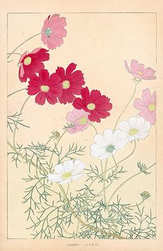 Chigusa Soun Flowers of Japan Woodblock Prints 1900