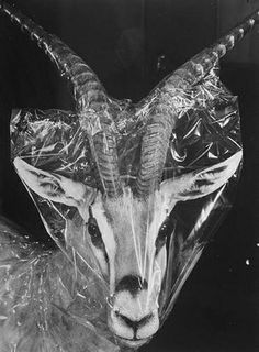 FFFFOUND! | Images from a Natural History Museum «