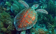 Culebra Beach Puerto Rico Snorkeling Tour Guide and Day Trip - East Island Excursions