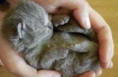 Newborn Kittens - 58 Pictures