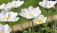 Hobbybruket: Sol, sommer og ny blomsterkasse :) Plants, Plant, Planets