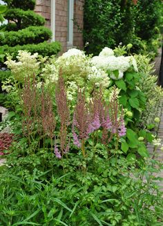 Three Dogs in a Garden: Hydrangeas: Care Basics/ Old & New Varieties