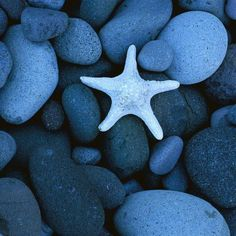 Sea Star on a Rocky Beach Baja California Mexico - Ocean Life . Danbo, Delft, Love Blue, Blue And White, Color Blue, Colour Match, Blue Dream, Colour Combo, Baja California Mexico