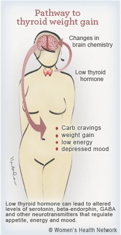 Even slight drops in thyroid hormone levels can slow weight-controlling hormones leading to more hunger, cravings and frustrating extra pounds. Sound familiar? You may not realize that you can interrupt thyroid-related weight gain with specific herbs and food choices that help boost your thyroid function. See 4 steps to stop thyroid weight gain: