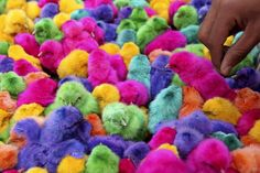 Colored chicks!