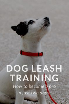 Your dog's judged on how well he behaves on a leash. Leash training can be stressful if you don't know where to begin. Want to impress other pet owners? Show how behaved is your dog when you two walks side by side. Read these tips!