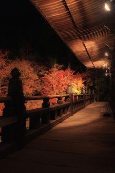 Autumn leaves at Kiyomizudera, Hyogo, Japan: photo by mptfk