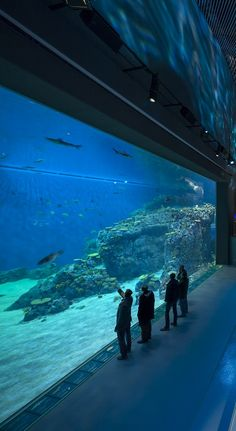 The #Copenhagen Blue Planet #Aquarium. Address: Jacob Fortlingsvej 1, 2770 Kastrup, Denmark.  This popular attraction with all the allure of the natural world is free to enter with the Copenhagen Card: https://www.cityxplora.com/products/copenhagen-card.