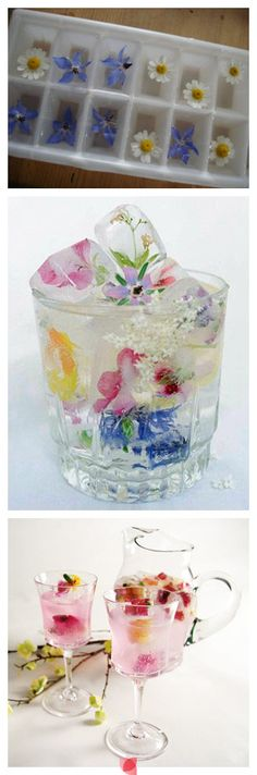 S's idea: freeze flowers in ice cubes for festive drinks!°°