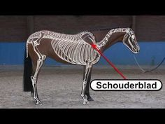 Video: Deze video laat je stap voor stap zien hoe het skelet van het paard eruit ziet. #horseridding