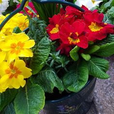 Happy Easter everyone have a pretty bucket of flowers  #DH