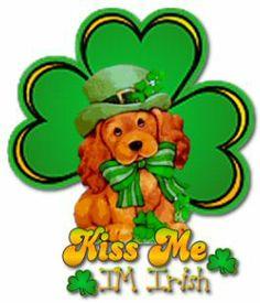 Cocker Spaniel kiss me I'm Irish