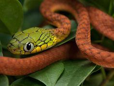 51 Amazing Photographs of Reptiles amazing-reptile-photography (17) – SNEAKHYPE