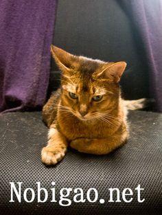 里親さんブログとりあえず流行りに乗って! - http://iyaiya.jp/cat/archives/78078