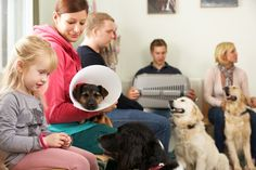 Canine Stress In The Vet's Waiting Room