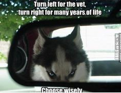 The post Siberian Husky humor Close Close Close Elizabeth appeared first on Bruce Kennels. Funny Dog Memes, Funny Animal Memes, Cute Funny Animals, Funny Dogs, Cute Dogs, Dog Humor, Funniest Memes, Memes Humor, Hilarious Sayings