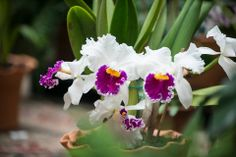 Gorgeous orchids in #Biltmore House, from 2014. www.biltmore.com