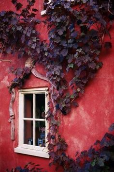 Moments | Red | Tawny Port | House | Wall | Fall | Home | Trend | Color |