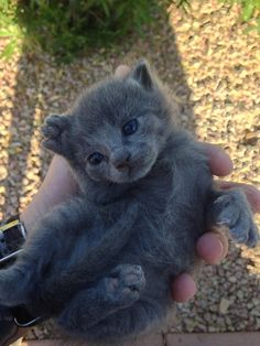 And this teeny-tiny baby who has the cutest lil' feet the world has ever seen. | 23 Cat Pictures That Will Make You Almost Too Happy