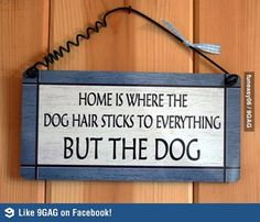 Dog owners will know