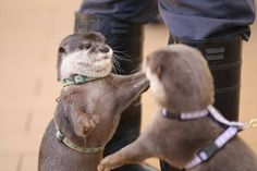 Otter is just about to give his friend a hug!
