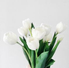 ~ white tulips ~